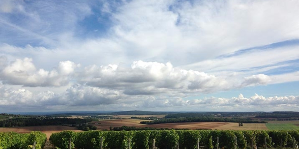 view over Domaine Villebois and Loire Valley